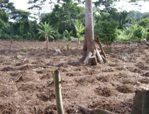 The cassava project – Introduction & Planning